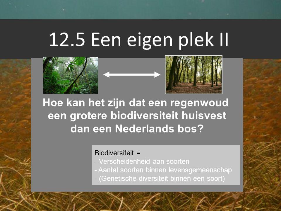 Hoe kan het zijn dat een regenwoud een grotere biodiversiteit huisvest