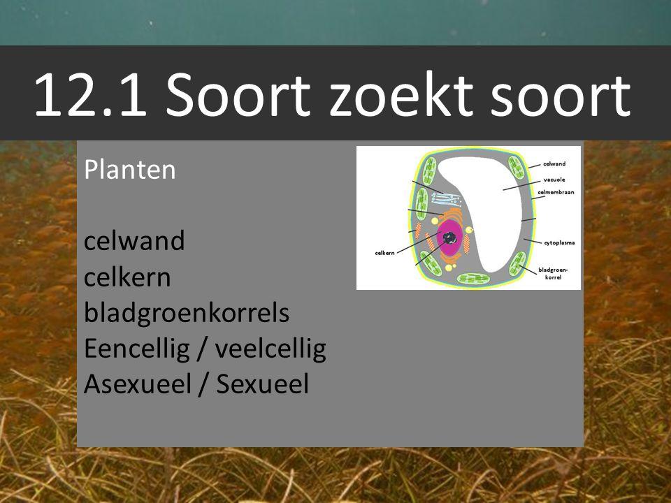 12.1 Soort zoekt soort Planten celwand celkern bladgroenkorrels
