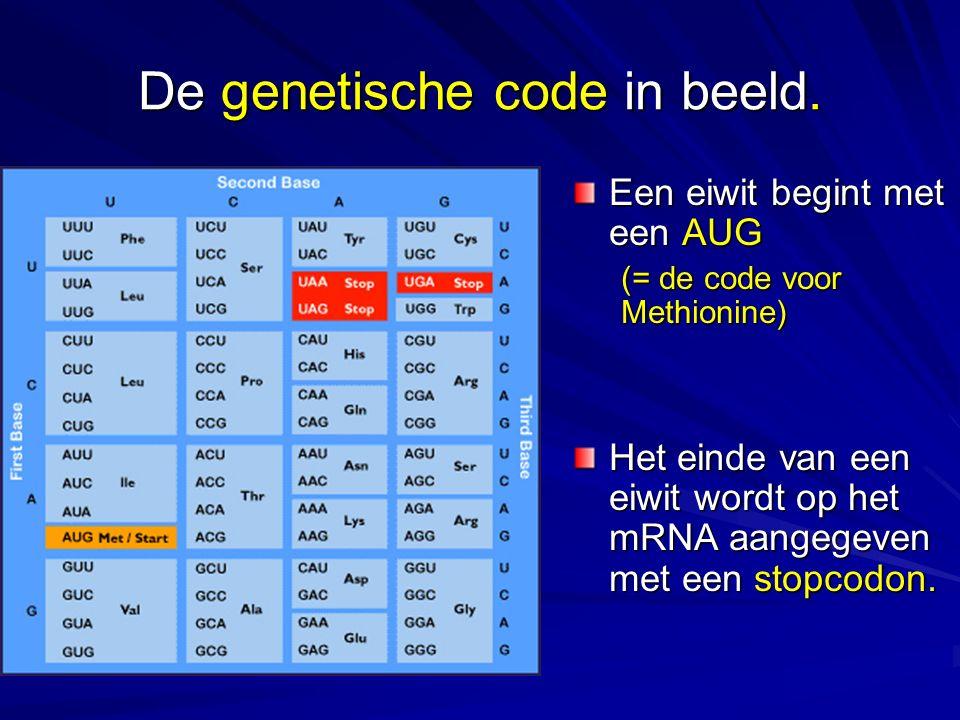 De genetische code in beeld.