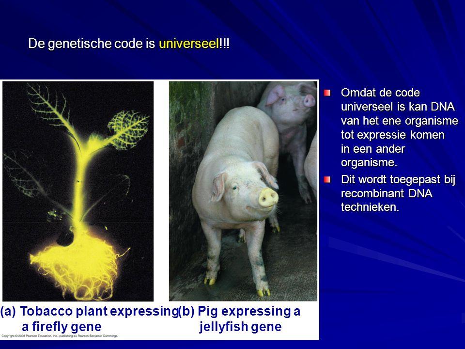 De genetische code is universeel!!!