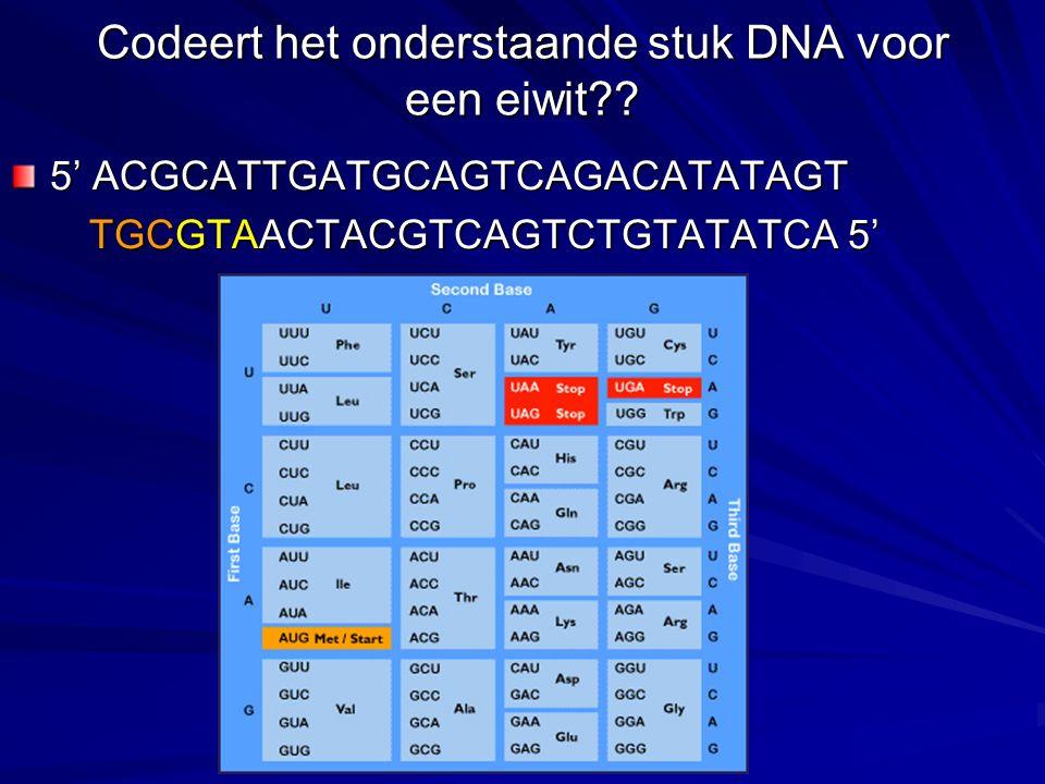 Codeert het onderstaande stuk DNA voor een eiwit