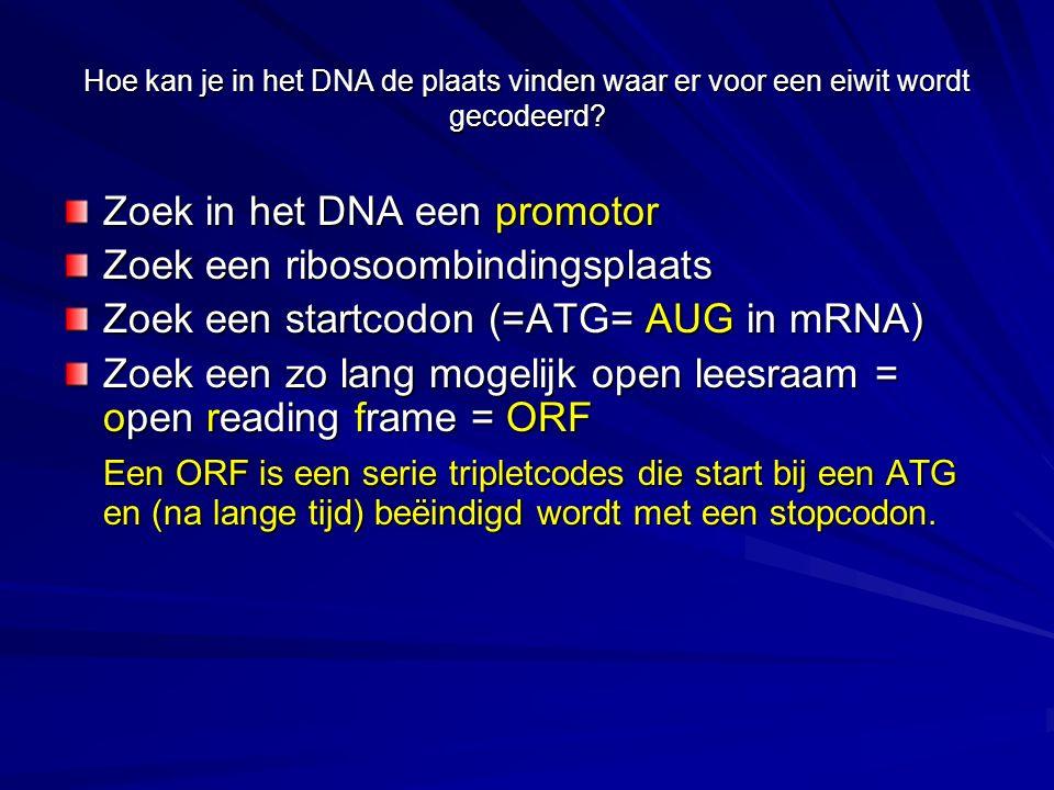 Zoek in het DNA een promotor Zoek een ribosoombindingsplaats