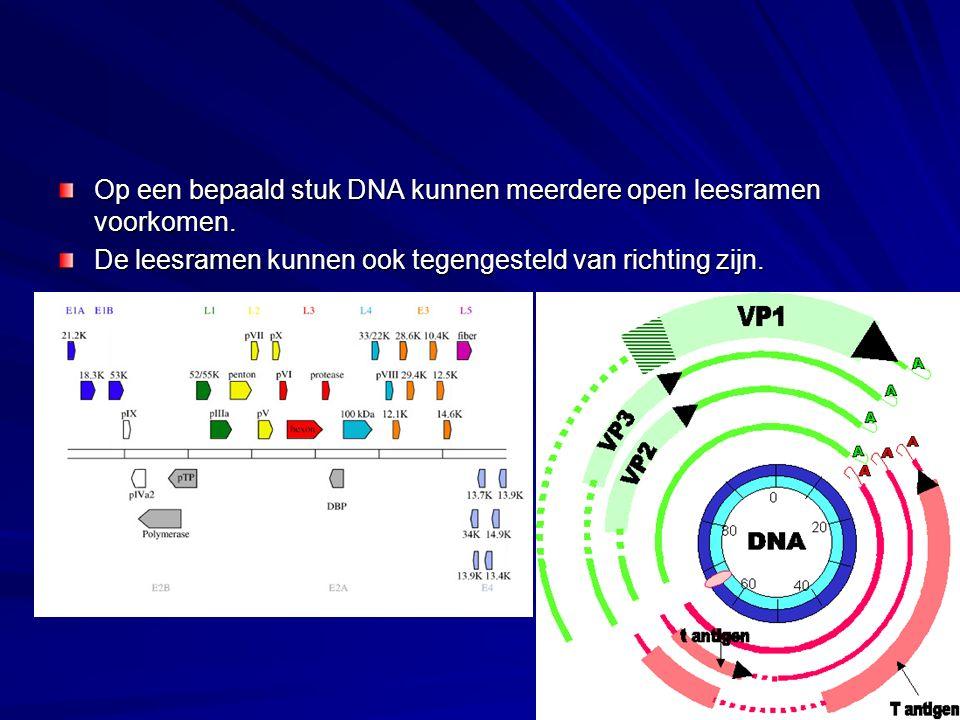Op een bepaald stuk DNA kunnen meerdere open leesramen voorkomen.