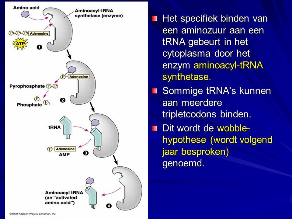 Het specifiek binden van een aminozuur aan een tRNA gebeurt in het cytoplasma door het enzym aminoacyl-tRNA synthetase.