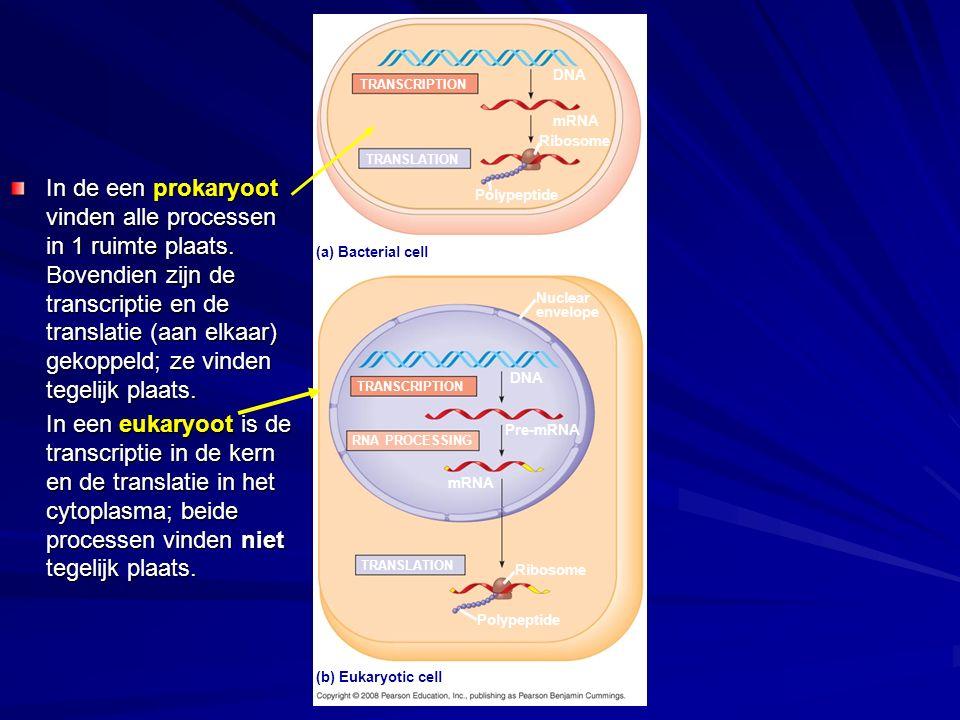 DNA TRANSCRIPTION. mRNA. Ribosome. TRANSLATION.
