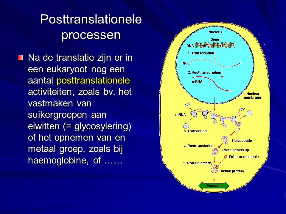 Posttranslationele processen