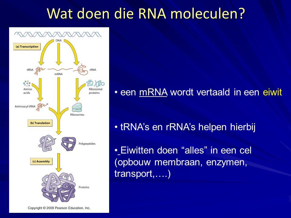 Wat doen die RNA moleculen