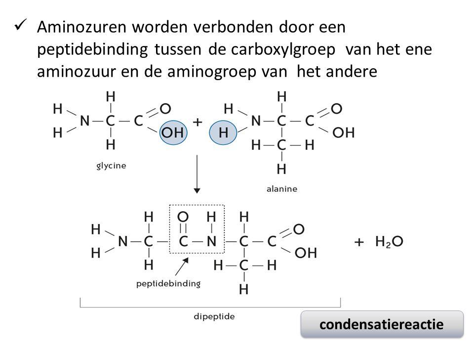 Aminozuren worden verbonden door een peptidebinding tussen de carboxylgroep van het ene aminozuur en de aminogroep van het andere