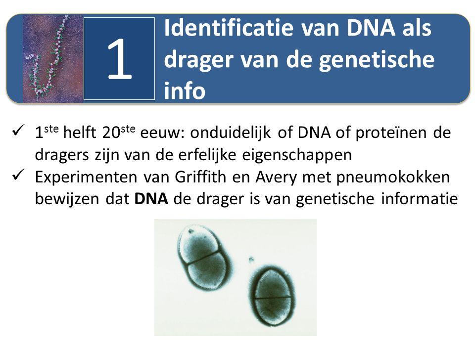 1 Identificatie van DNA als drager van de genetische info