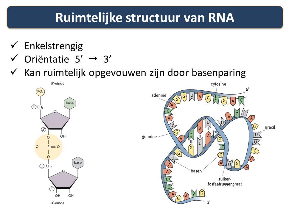 Ruimtelijke structuur van RNA