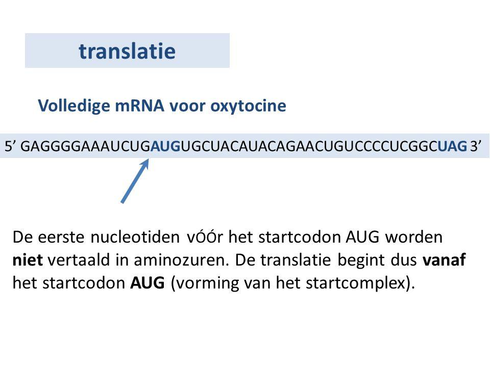 translatie Volledige mRNA voor oxytocine