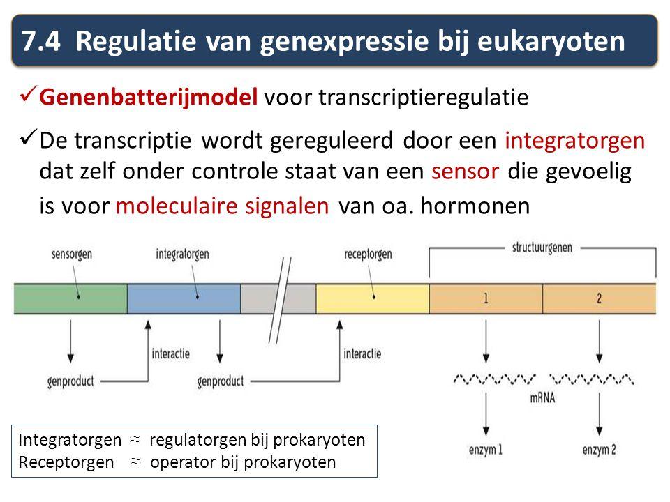 7.4 Regulatie van genexpressie bij eukaryoten