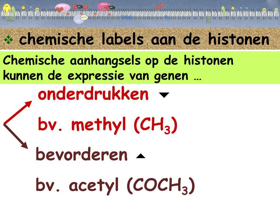 onderdrukken  bv. methyl (CH3) bevorderen bv. acetyl (COCH3) 
