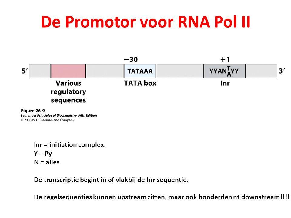 De Promotor voor RNA Pol II