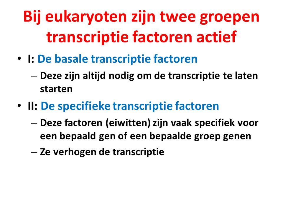 Bij eukaryoten zijn twee groepen transcriptie factoren actief