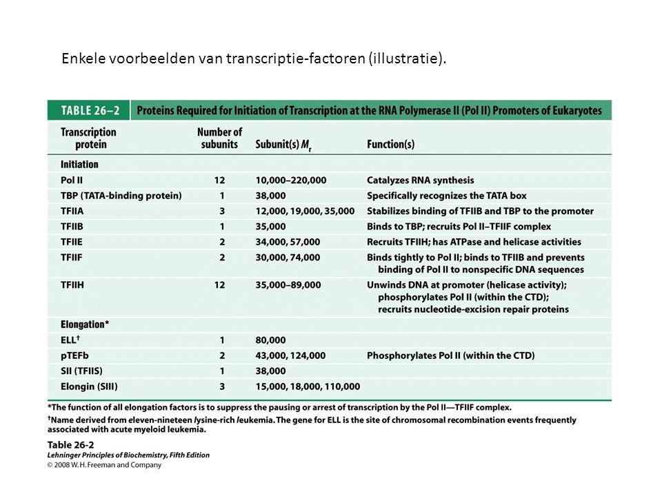 Enkele voorbeelden van transcriptie-factoren (illustratie).