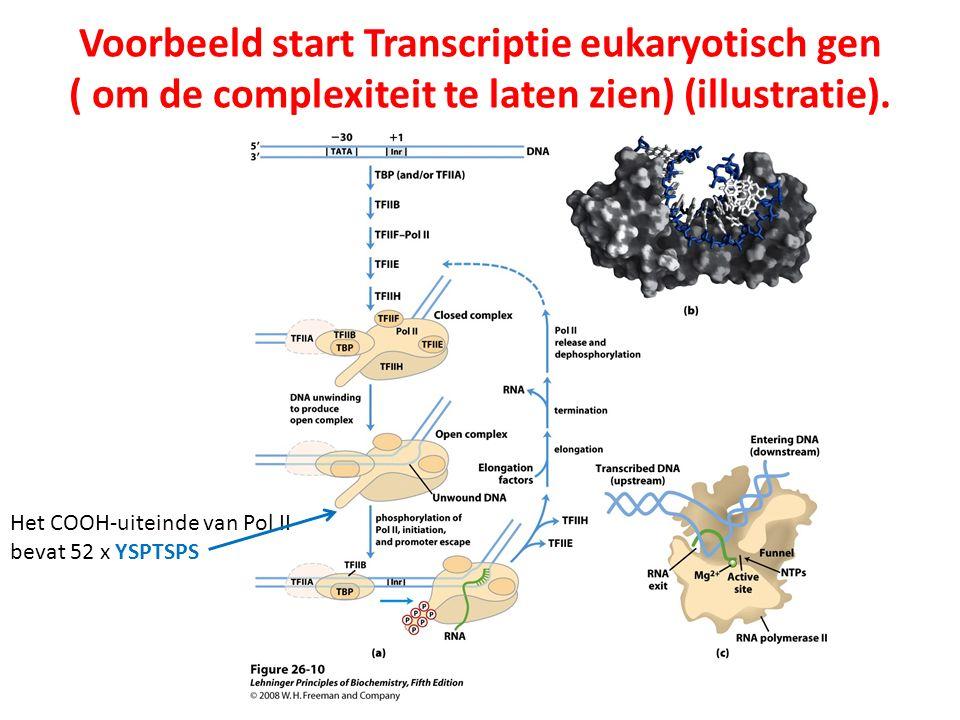 Voorbeeld start Transcriptie eukaryotisch gen ( om de complexiteit te laten zien) (illustratie).