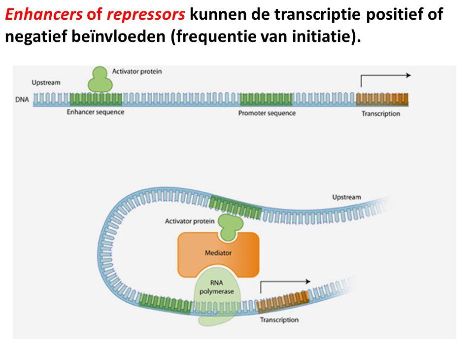 Enhancers of repressors kunnen de transcriptie positief of negatief beïnvloeden (frequentie van initiatie).