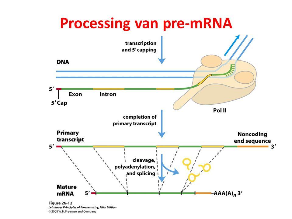 Processing van pre-mRNA