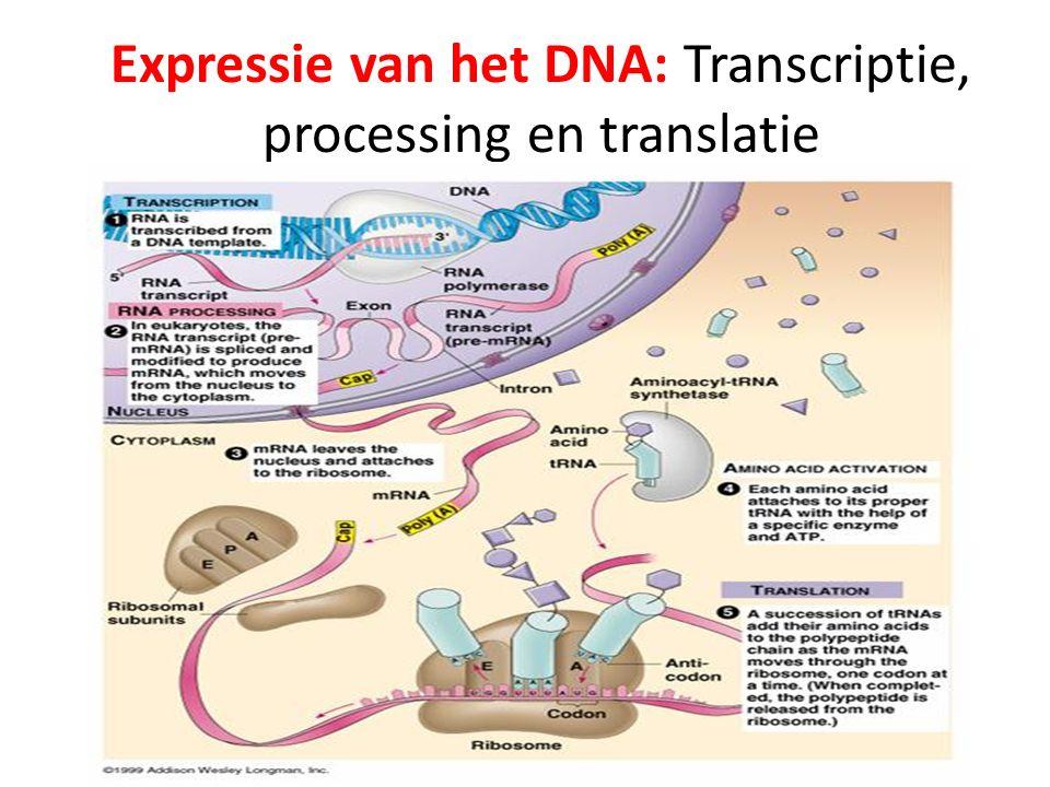 Expressie van het DNA: Transcriptie, processing en translatie