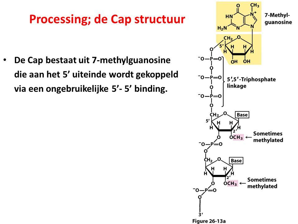 Processing; de Cap structuur