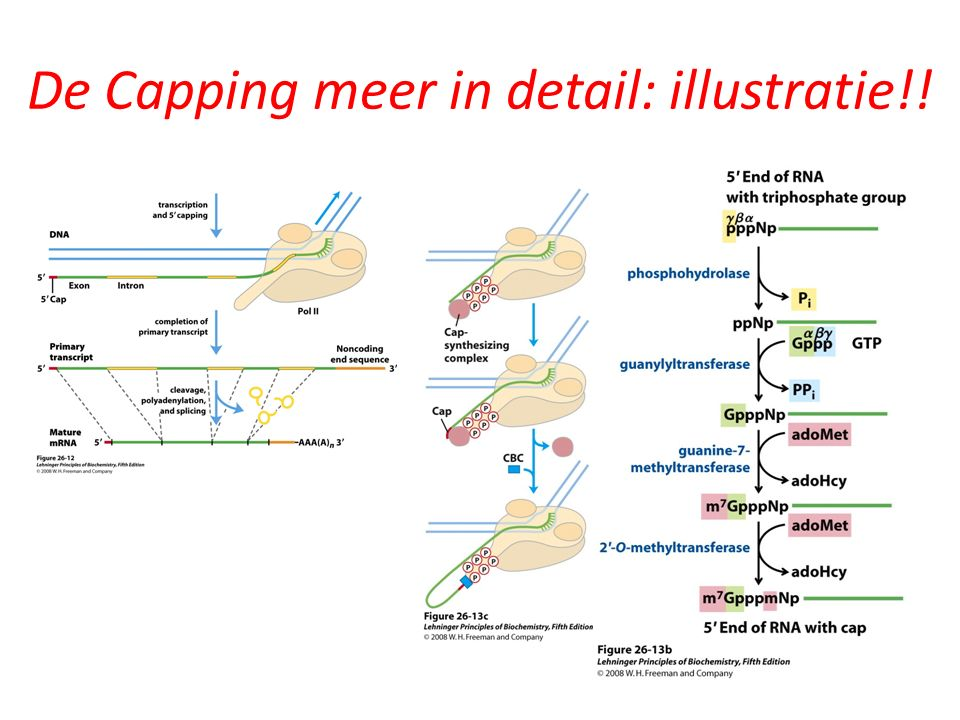 De Capping meer in detail: illustratie!!