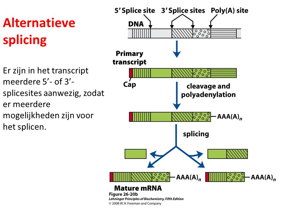 Alternatieve splicing