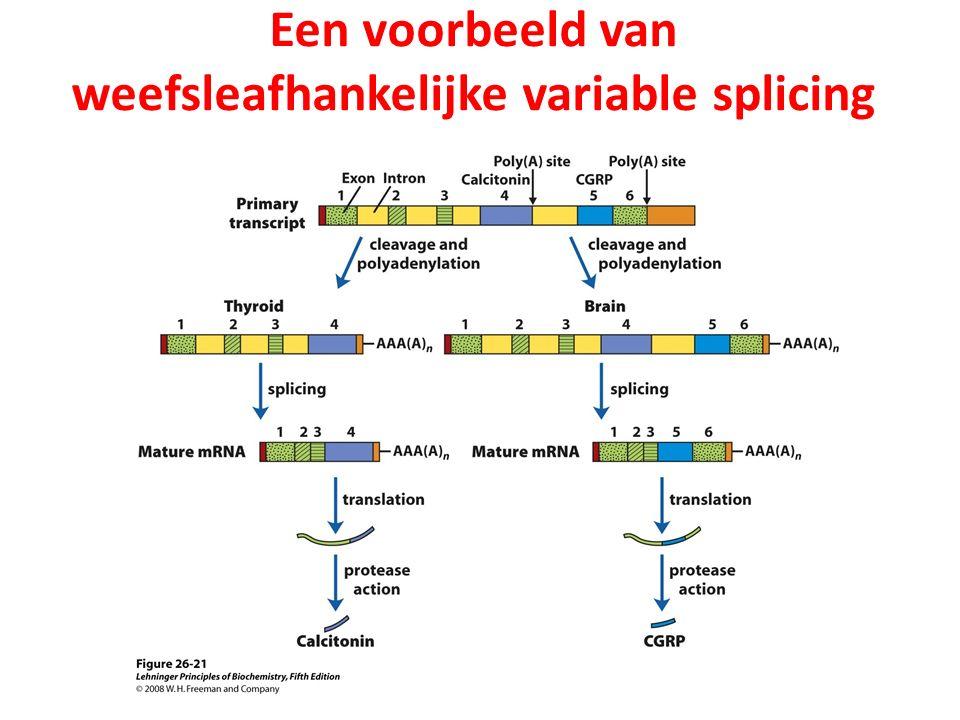 Een voorbeeld van weefsleafhankelijke variable splicing