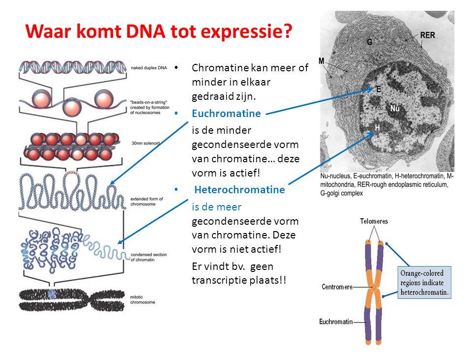 Waar komt DNA tot expressie