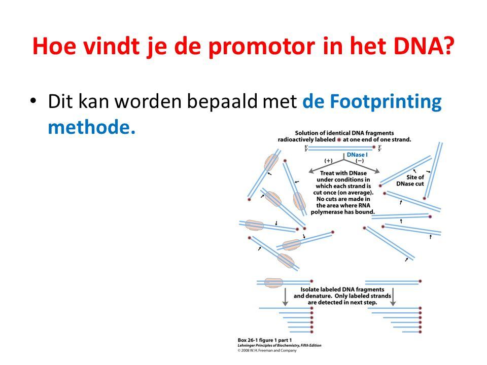 Hoe vindt je de promotor in het DNA