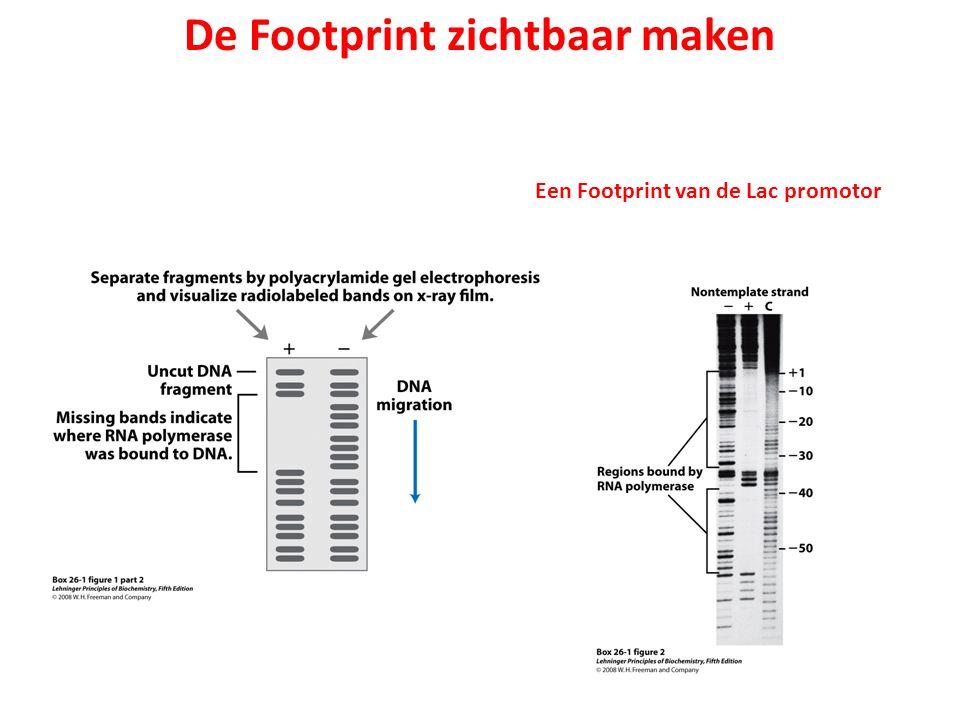 De Footprint zichtbaar maken