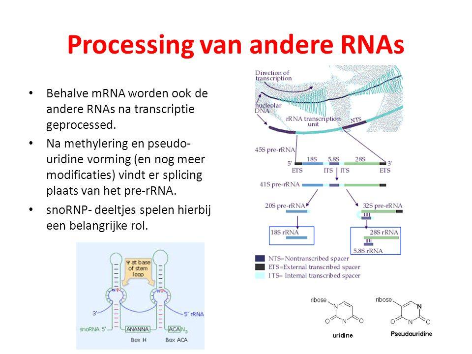 Processing van andere RNAs