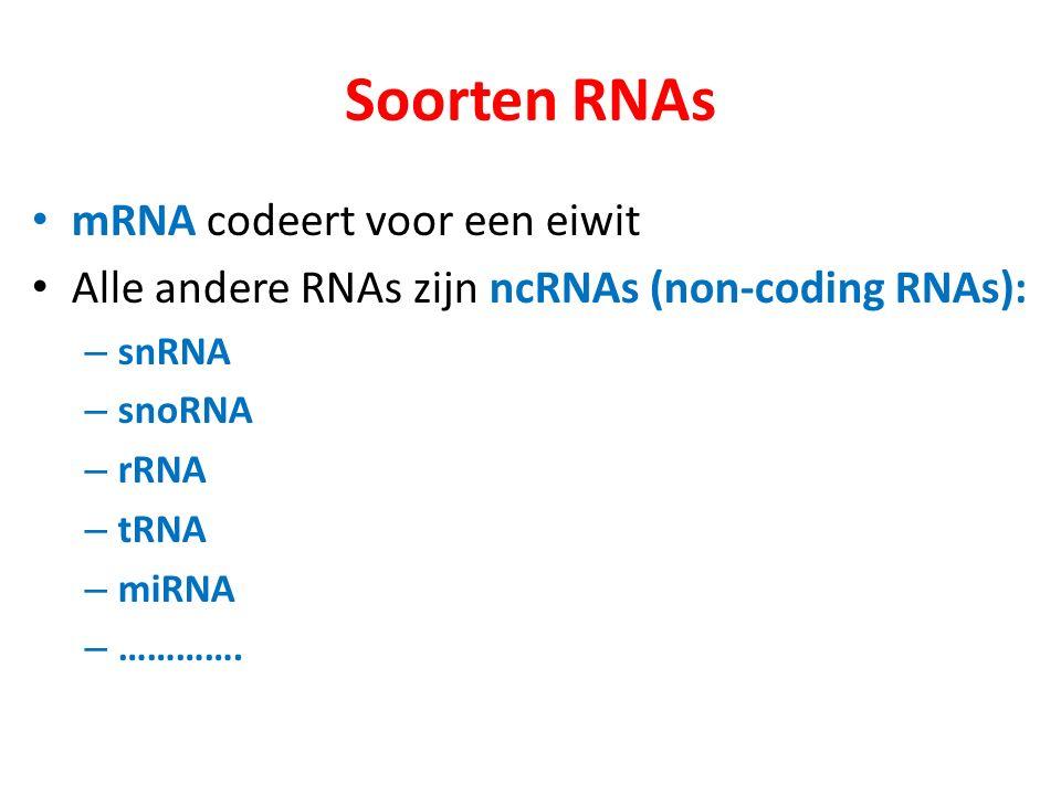 Soorten RNAs mRNA codeert voor een eiwit