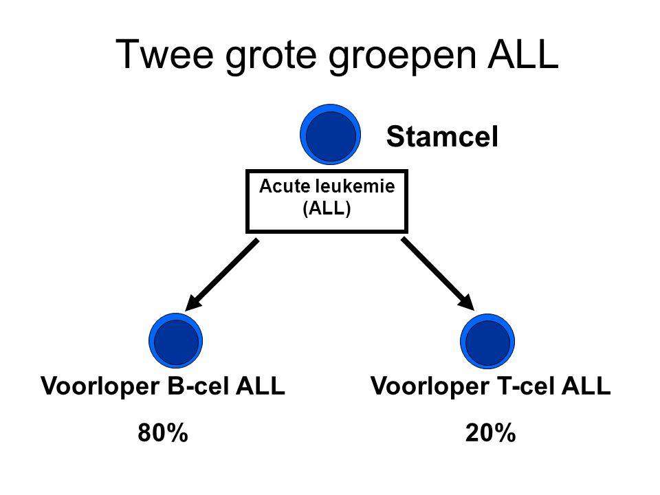 Twee grote groepen ALL Stamcel Voorloper B-cel ALL 80%