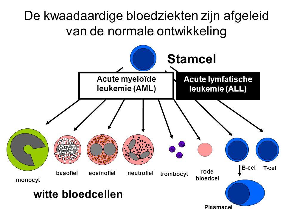 De kwaadaardige bloedziekten zijn afgeleid van de normale ontwikkeling