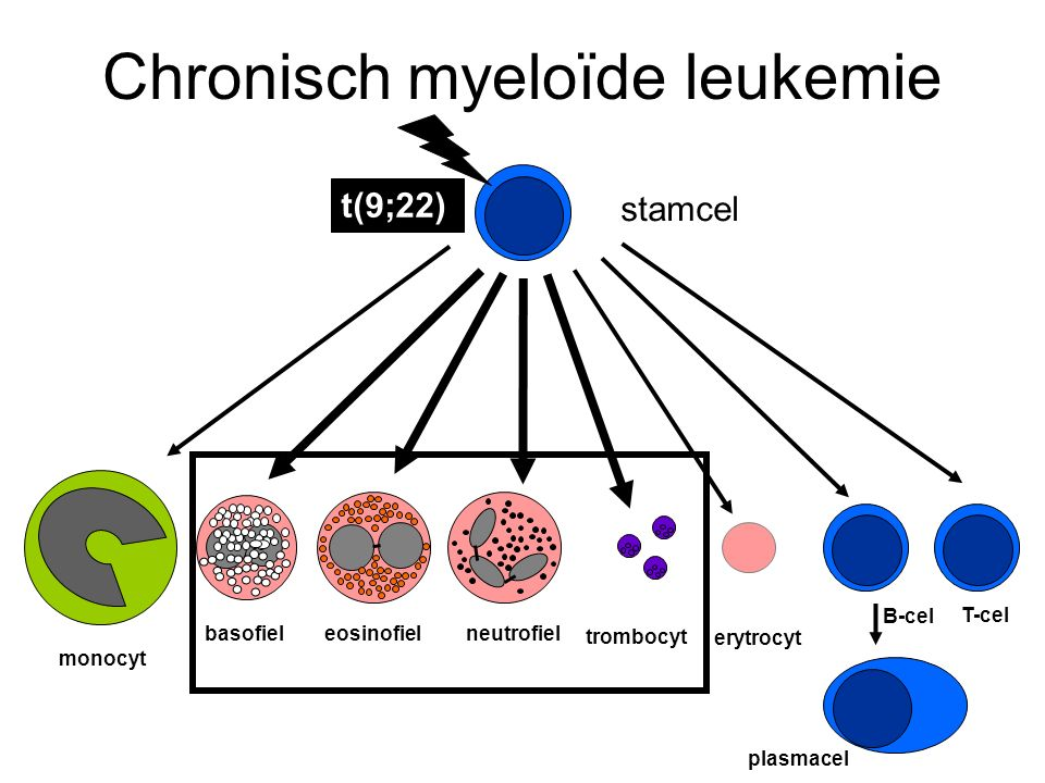Chronisch myeloïde leukemie