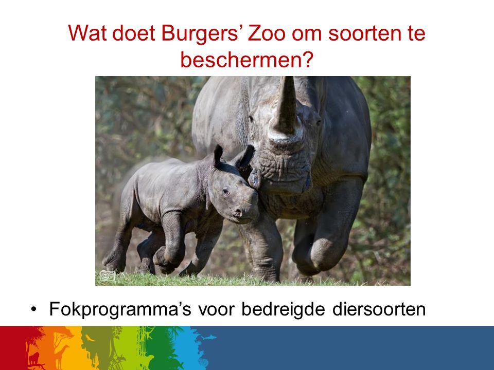 Wat doet Burgers' Zoo om soorten te beschermen