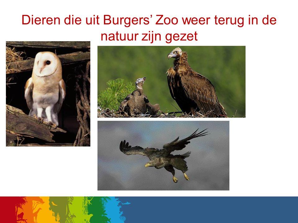 Dieren die uit Burgers' Zoo weer terug in de natuur zijn gezet