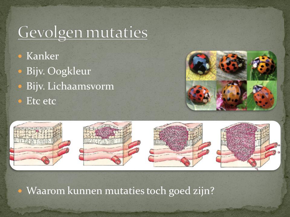 Gevolgen mutaties Kanker Bijv. Oogkleur Bijv. Lichaamsvorm Etc etc