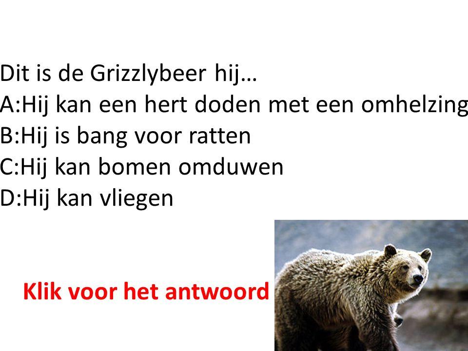Dit is de Grizzlybeer hij… A:Hij kan een hert doden met een omhelzing B:Hij is bang voor ratten C:Hij kan bomen omduwen D:Hij kan vliegen Klik voor het antwoord