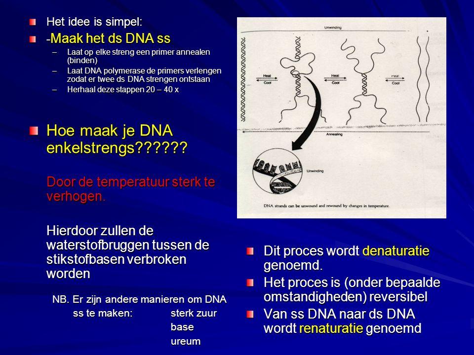Hoe maak je DNA enkelstrengs