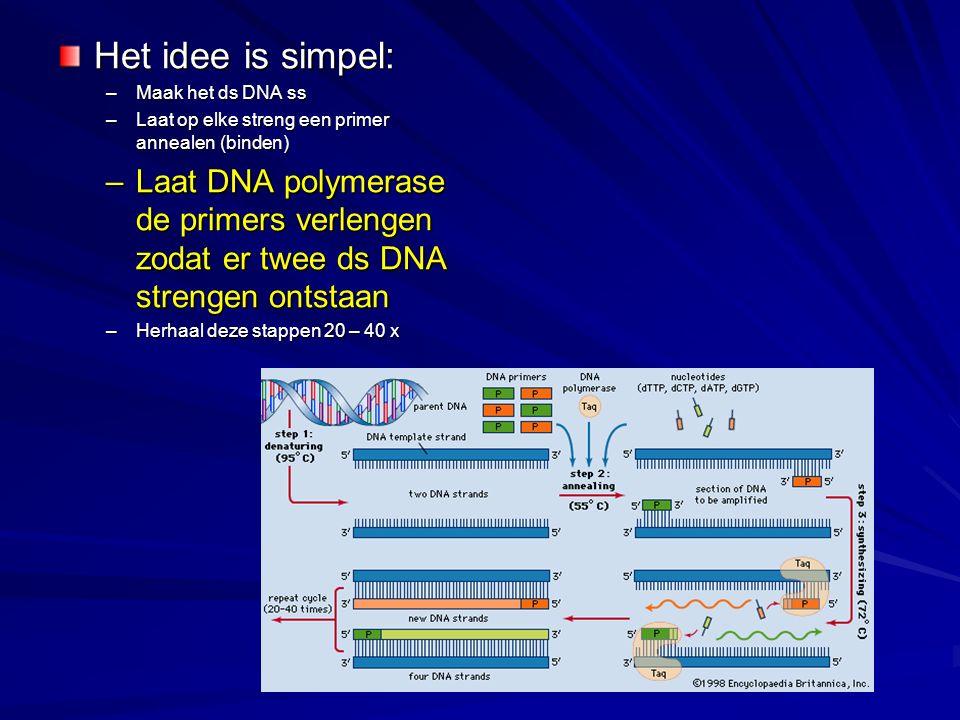 Het idee is simpel: Maak het ds DNA ss. Laat op elke streng een primer annealen (binden)