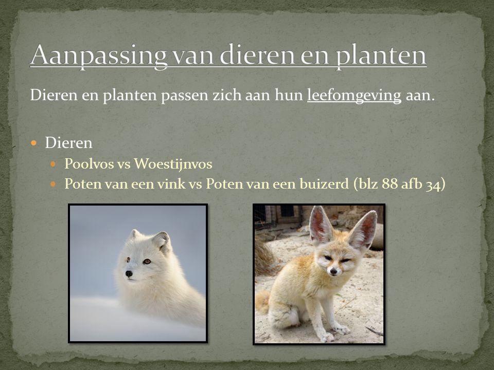 Aanpassing van dieren en planten