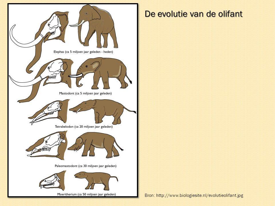 De evolutie van de olifant