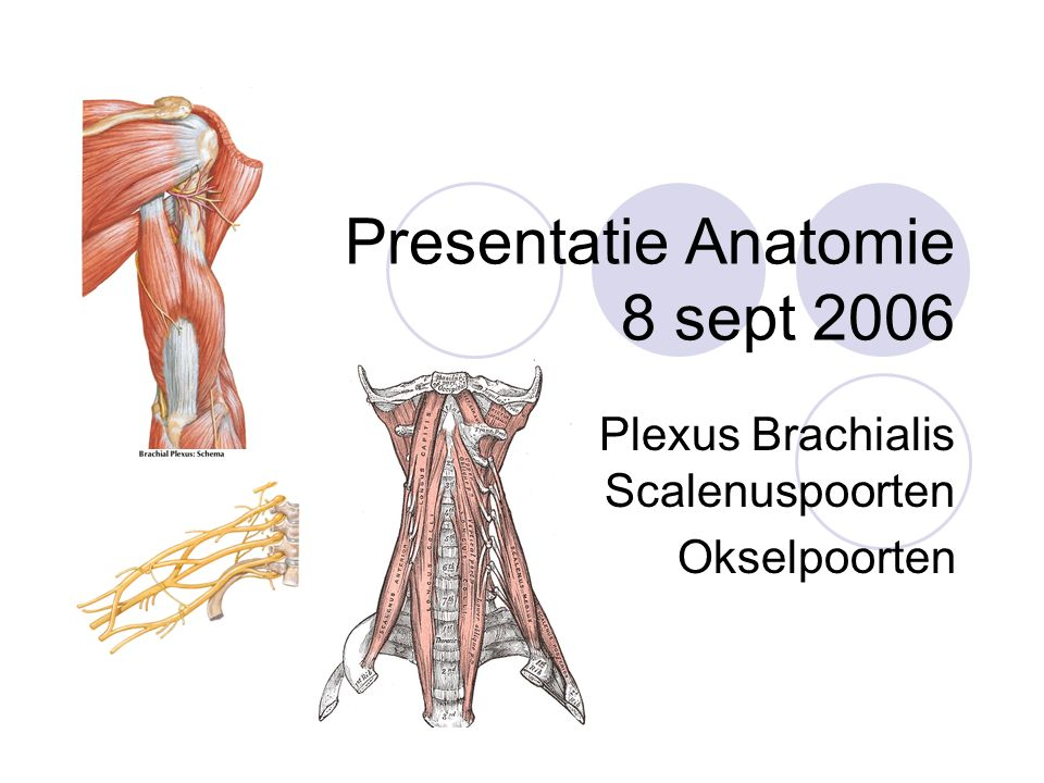 Presentatie Anatomie 8 sept ppt video online download