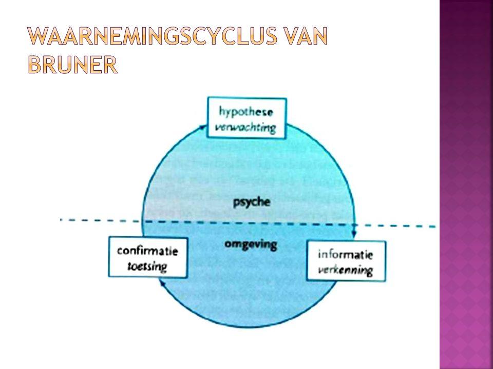 Waarnemingscyclus van Bruner
