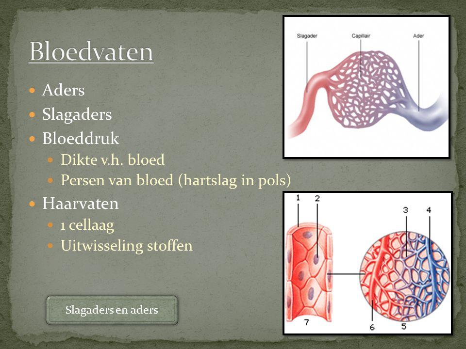 Bloedvaten Aders Slagaders Bloeddruk Haarvaten Dikte v.h. bloed