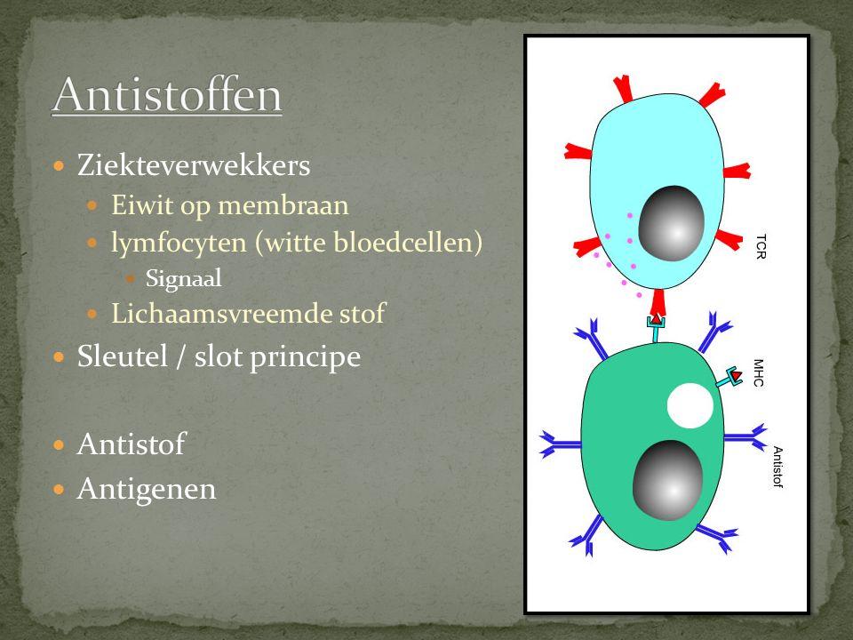 Antistoffen Ziekteverwekkers Sleutel / slot principe Antistof