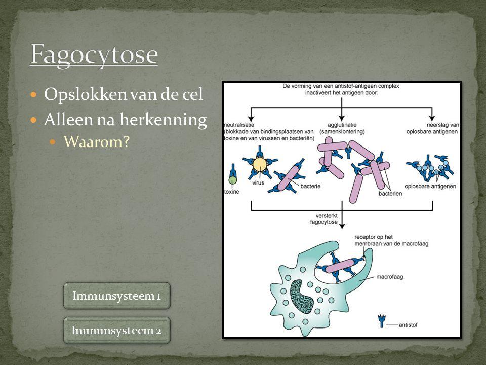 Fagocytose Opslokken van de cel Alleen na herkenning Waarom