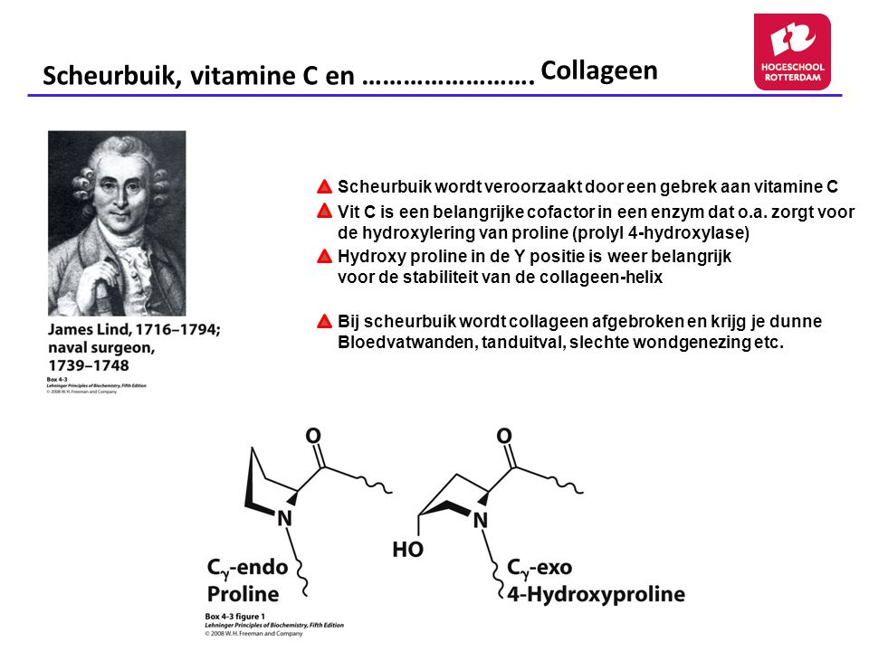 Scheurbuik, vitamine C en ……………………. Collageen